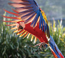 See Australia Zoo and Ginger Factory with transfers from your accommodation included.